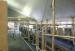 Nieuwbouw koeienstal in Putten